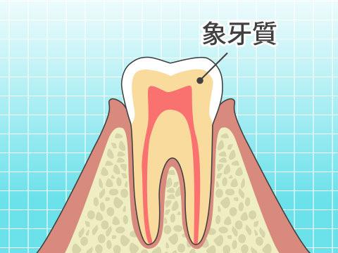 象牙質(ゾウゲシツ)