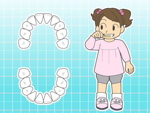 乳歯(ニュウシ)