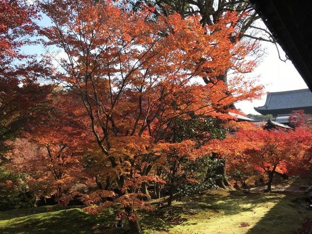京都一の紅葉と観光の名所「大本山東福寺」
