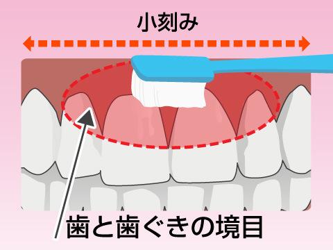 歯ブラシは歯と歯ぐきの境目に当てる