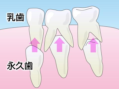 乳児の歯の基礎知識