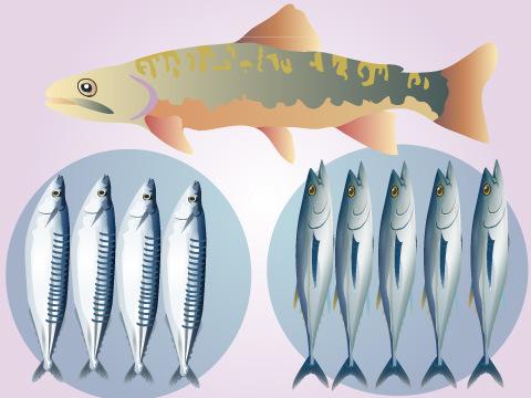 秋が旬の魚介類