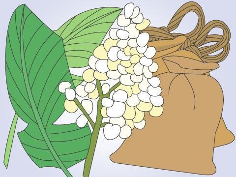 麻の類似繊維や代用繊維