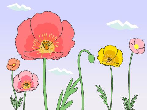 ポピー(開花時期:3~6月)