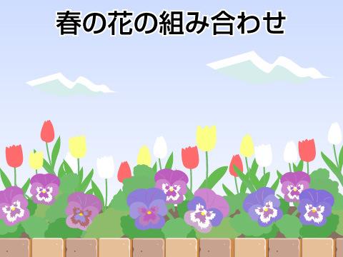 春のガーデンの花の組み合わせ方