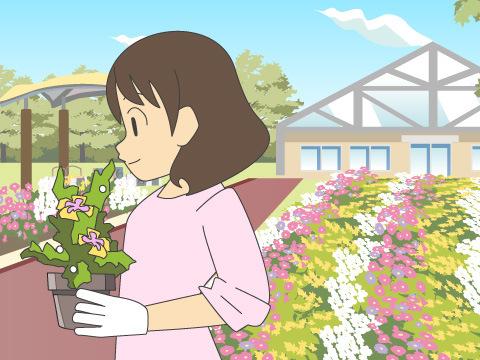 冬に開花する花