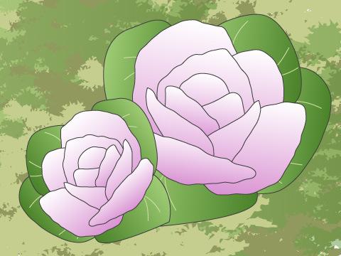ハボタン(開花時期:11~3月)