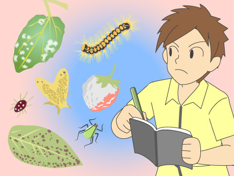 代表的な病気、害虫