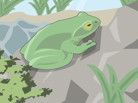 カエルの飼い方