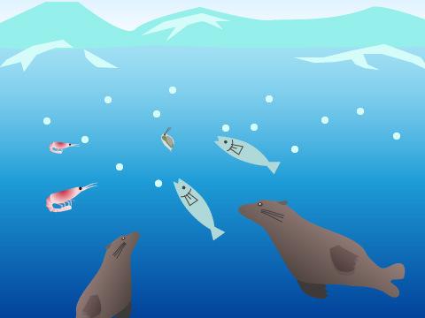 冬の極寒の知床の海では何が起こっているのか?