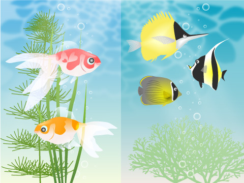 淡水魚と海水魚