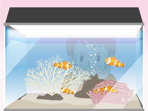 魚を飼育する楽しさとは