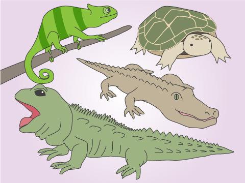 爬虫類の種類とは