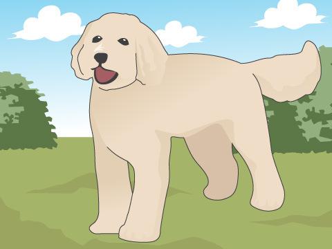 ミックス犬の魅力