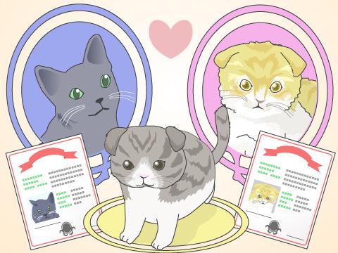 ミックス猫とは雑種である