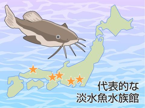 代表的な淡水魚水族館