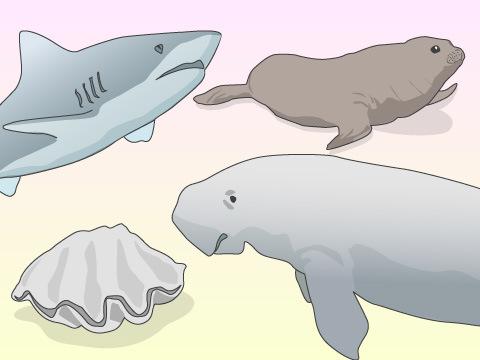 水族館で飼育されている珍しい生き物たち(一部のみ掲載)