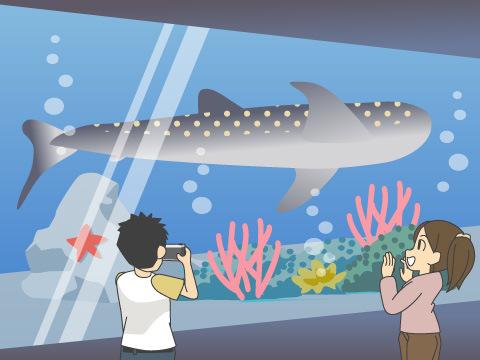 日本海側初の展示となるジンベエザメは必見