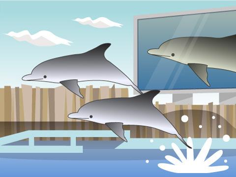 世界最大級のプールでイルカたちがパフォーマンス