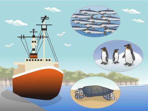 日本の海から南極への旅を再現