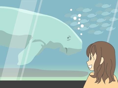 日本で唯一飼育展示 人魚伝説のジュゴン