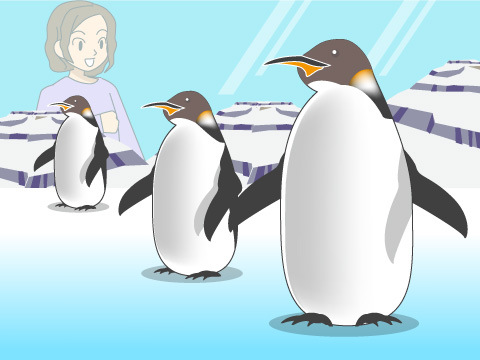 珍しいコウテイペンギンに会える