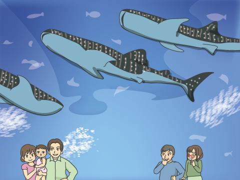 巨大水槽で悠々と泳ぐ3頭のジンベエザメ