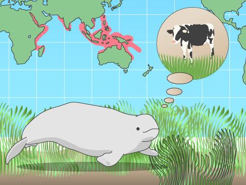大量の海草が主食のジュゴン