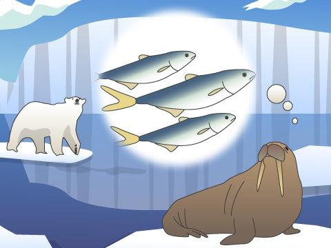 海獣たちの生活場所と餌を奪う氷の減少