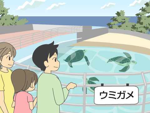ウミガメを観察するならこの水族館へ