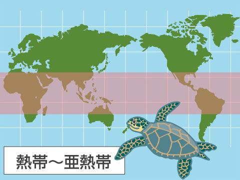 生息域は、沿岸と外洋回遊の2タイプ