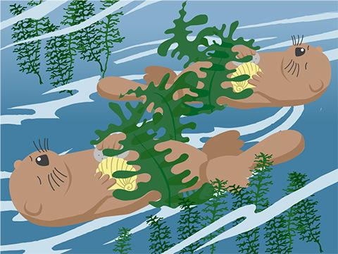 漂流防止のため、海藻を巻き付けて眠る