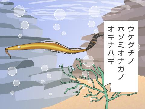 最も長い和名を持った生き物は?