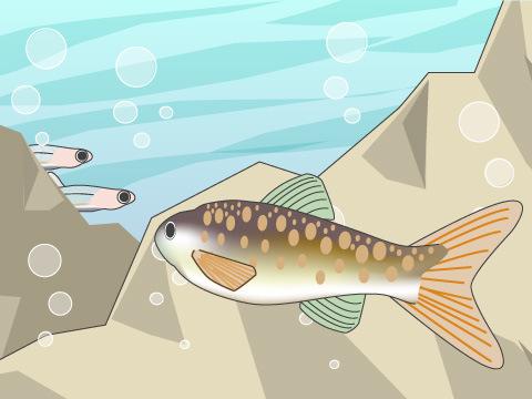 生息環境が厳しい上流域に棲むサケ・マス類