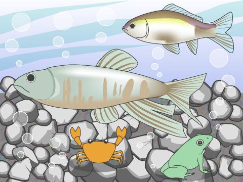 多種多様な生き物が生息する中流域