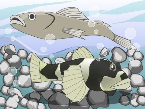 淡水と海水の魚が入り交じる下流&河口域
