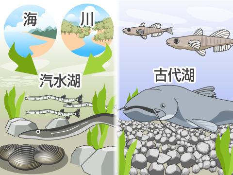 水質などの違いにより、異なる生き物が生息する湖
