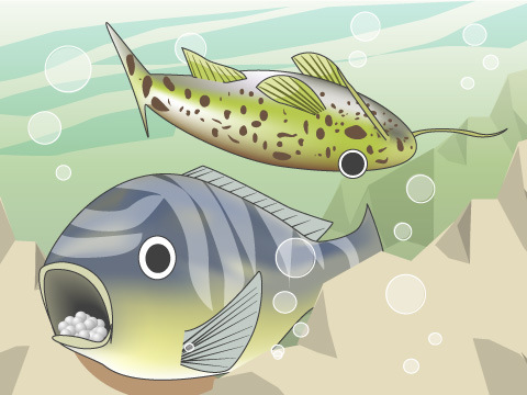 アフリカ大陸の熱帯雨林に暮らす淡水魚