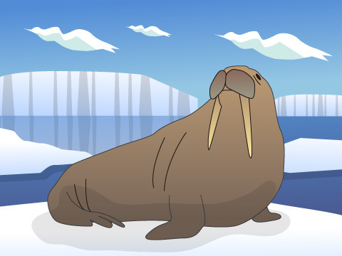 北極海で暮らす海獣たち