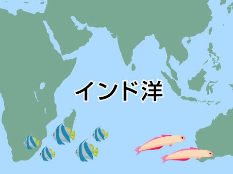 起伏に富んだ海底の地形に注目