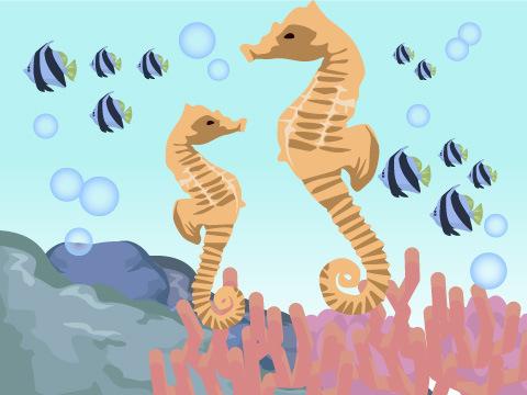 インド洋で出会える生き物たち