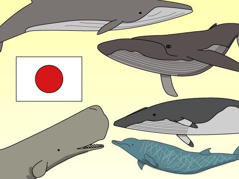 日本で見られるクジラ