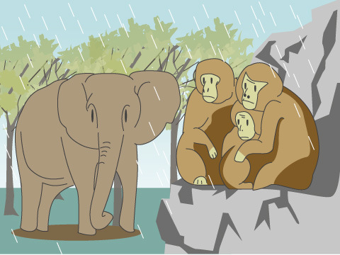 悪天候のとき、動物たちは?