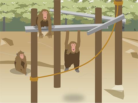 森を再現しなくても見られるチンパンジー本来の姿