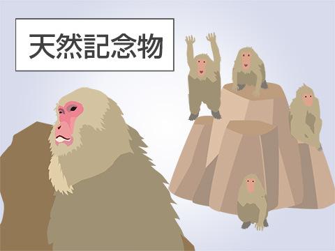 日本最古のサル山にいる天然記念物たち
