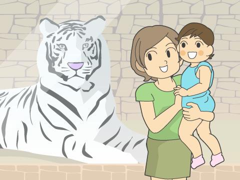 インドで神の使いとあがめられている「ホワイトタイガー」
