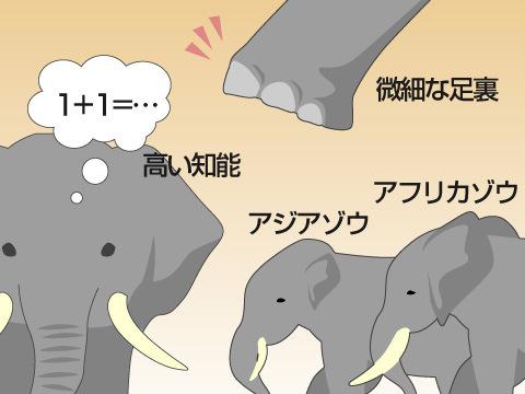 ゾウの特徴