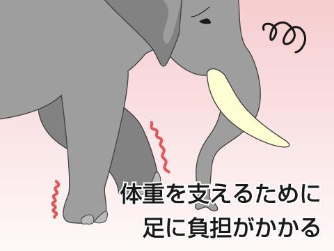ゾウが苦手なこと