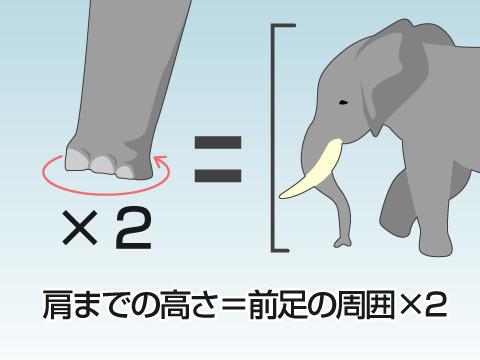 ≪コレ!知っておこう≫ゾウの高さはどう計る?