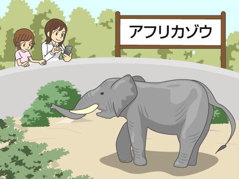 ゾウに会いに行こう